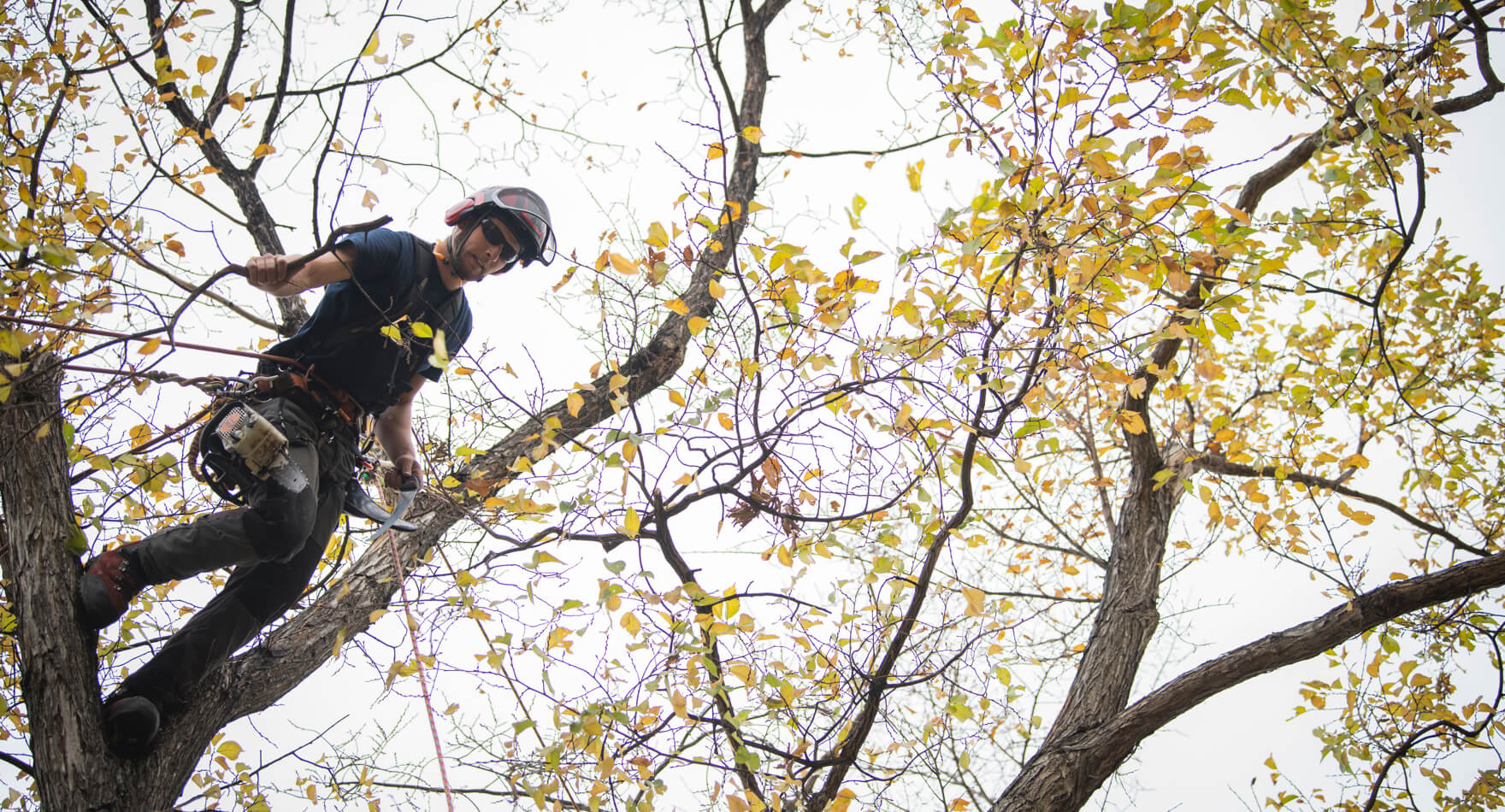 Tree Care Industry Trends and Predictions