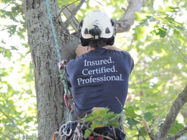 Tree service business Logan Experts