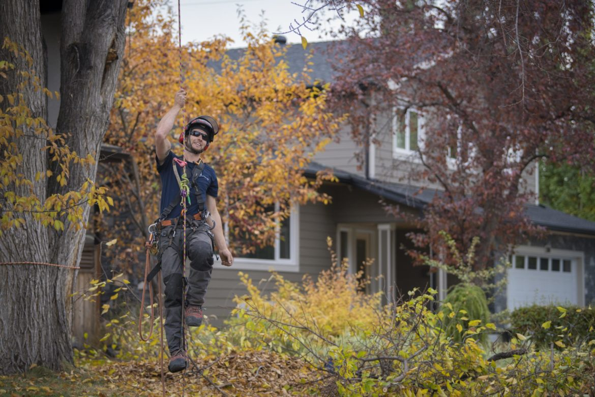 How to write a tree service business plan